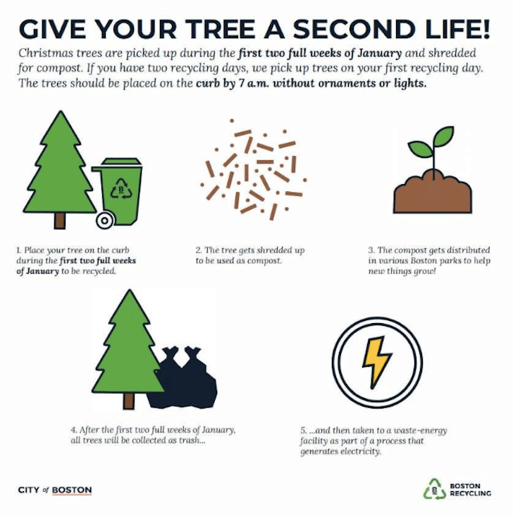 Christmas Trees Dorchester: Give Your Christmas Tree A Second Life